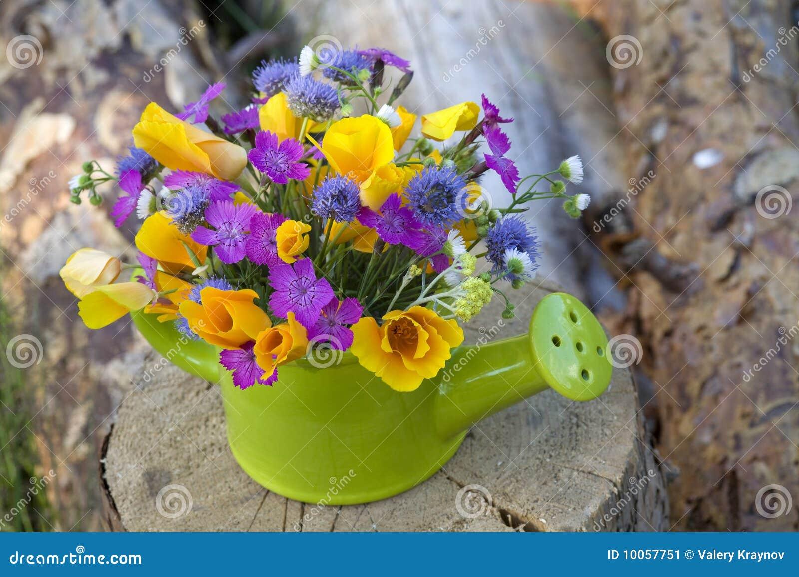 Grupo de flores selvagens