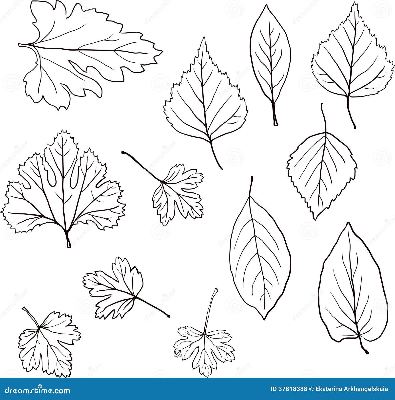 Grupo De Folhas Lineares Do Desenho Ilustracao Do Vetor