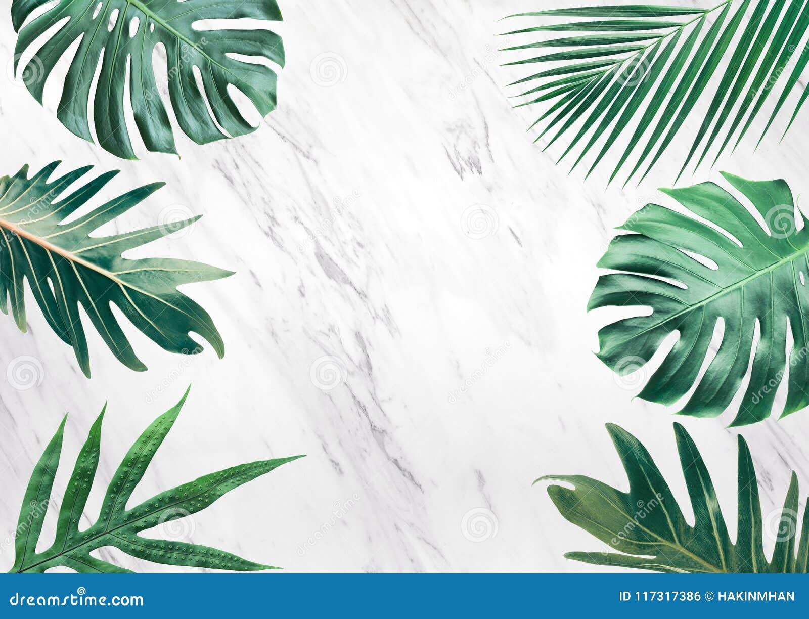 Grupo de folhas tropicais no fundo de mármore Copie o espaço nave