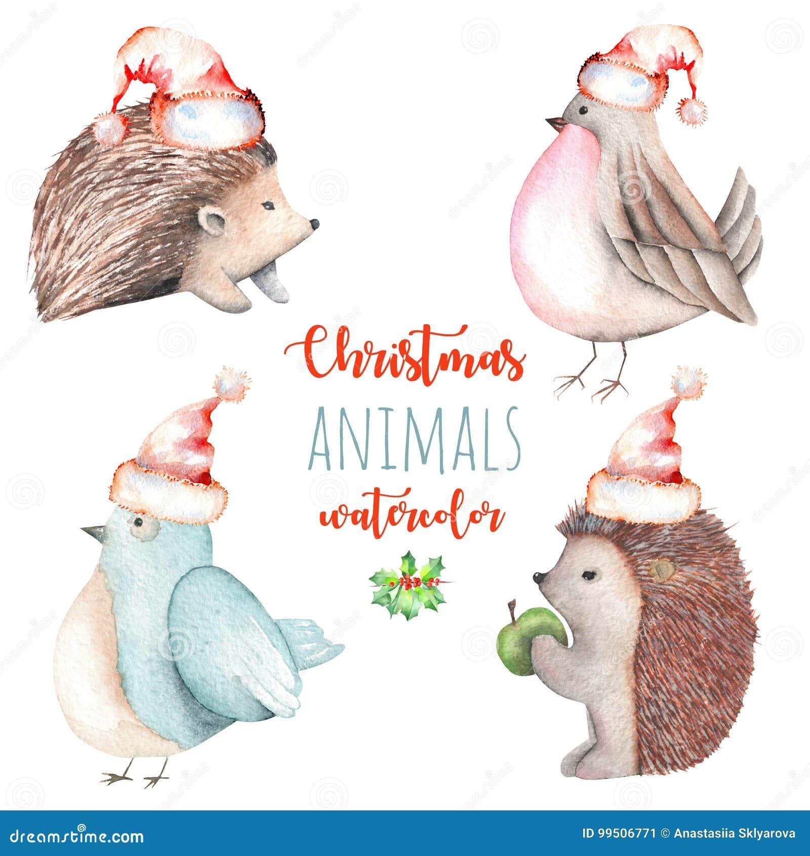 Grupo de ilustrações bonitos dos pássaros e dos ouriços do Natal da aquarela