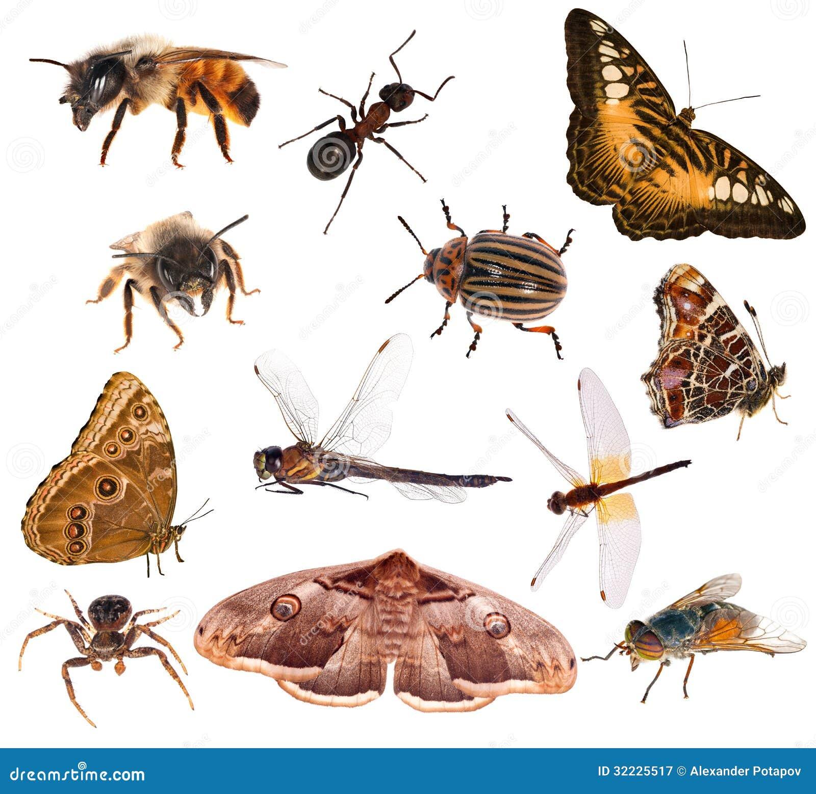 Download Grupo De Insetos Marrons Da Cor Isolados No Branco Imagem de Stock - Imagem de animal, marrom: 32225517