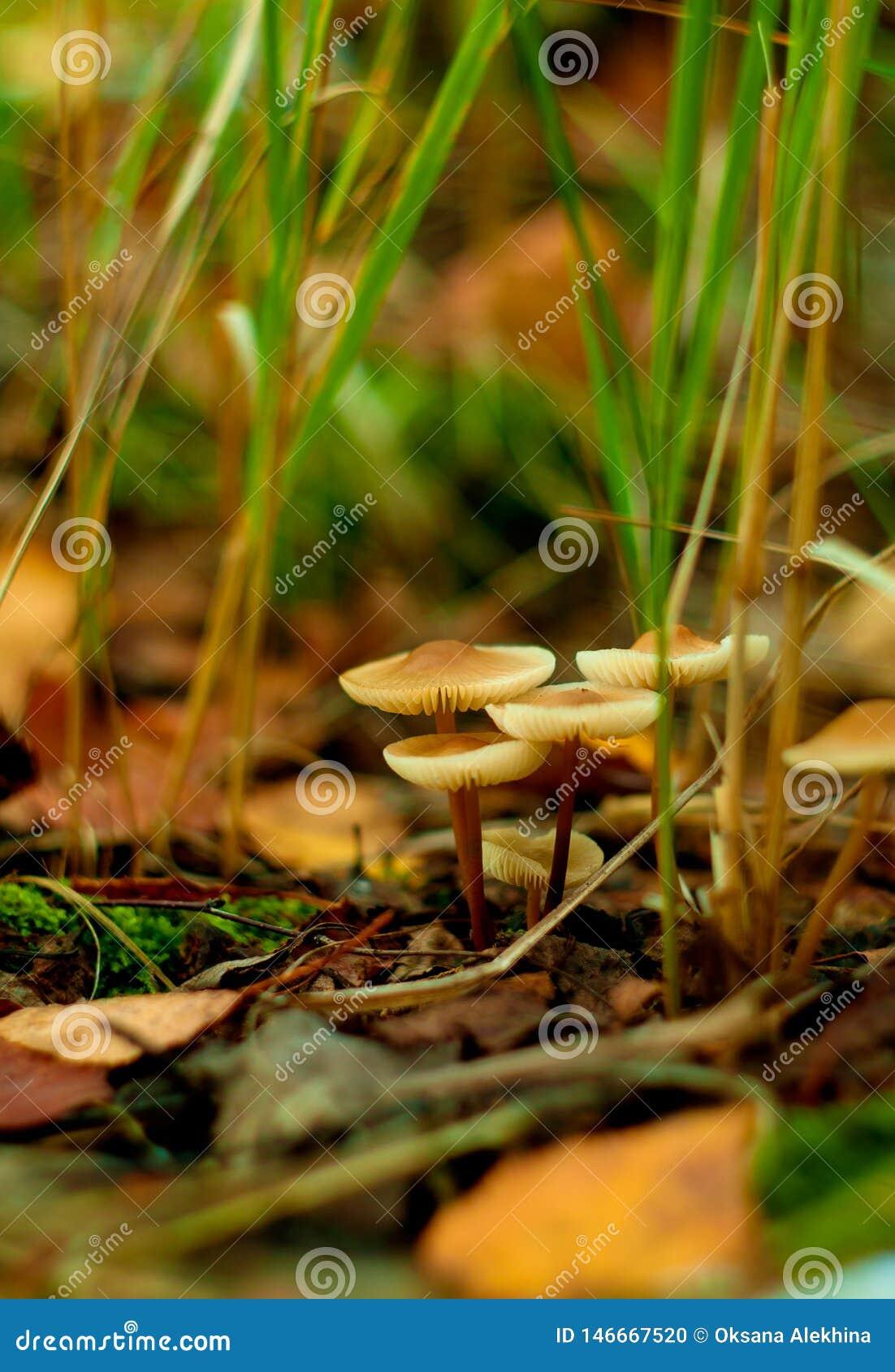 Grupo de la seta del bosque