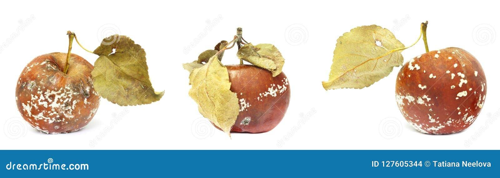 Grupo de molde que cresce na maçã velha Isolado na foto branca do fundo A contaminação de alimentos, mau estragou organi podre re