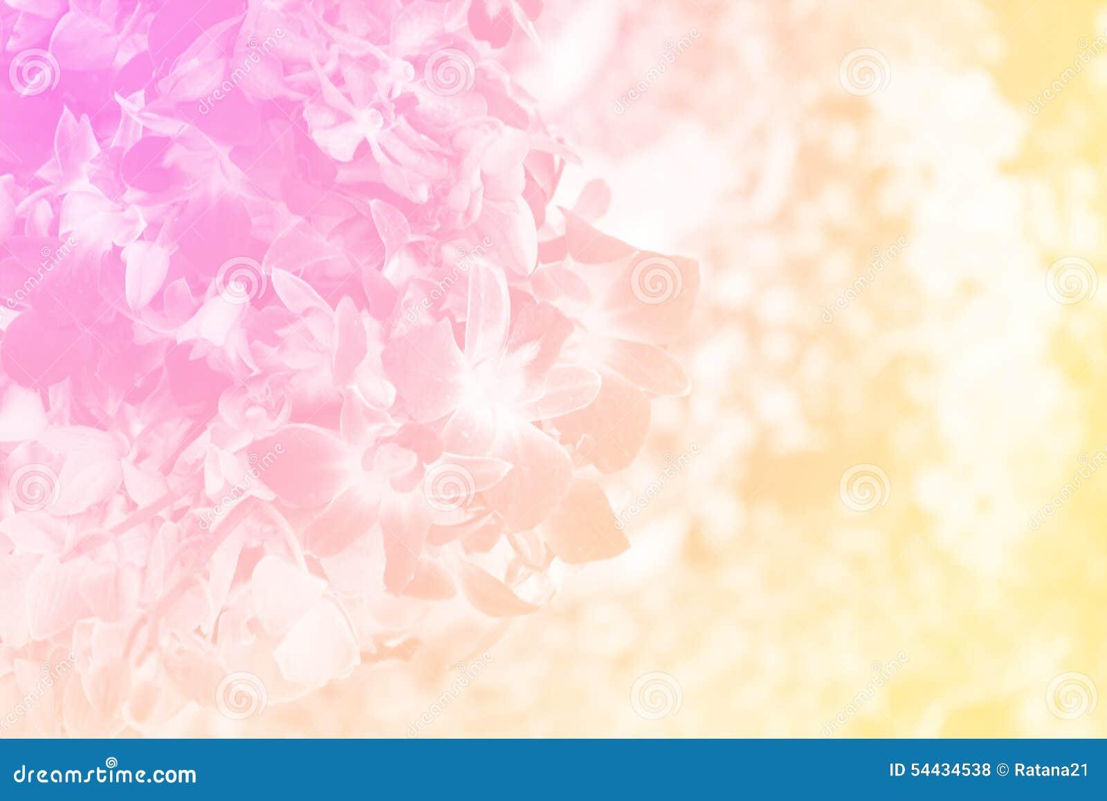 Grupo de orquídea del dendrobium en color suave