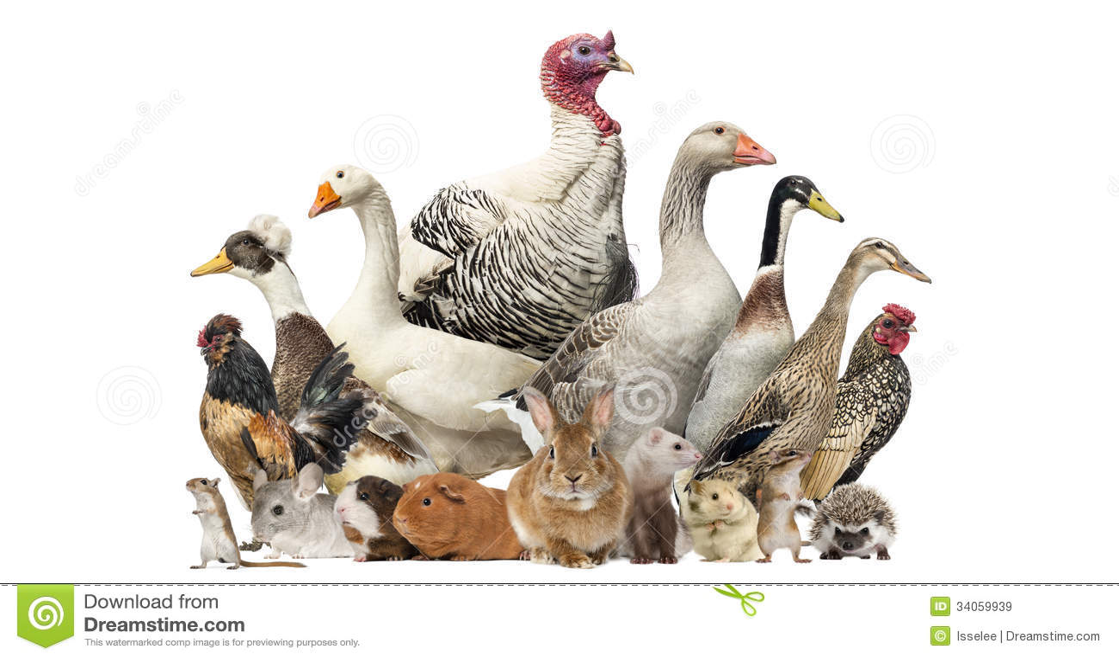 Grupo de pájaros y de roedores de la granja, aislado