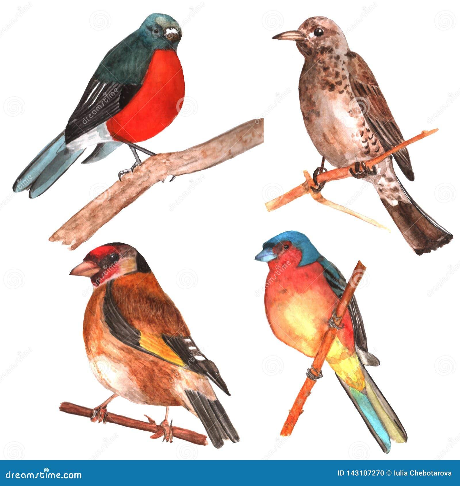 Grupo de pássaros isolados watercolor
