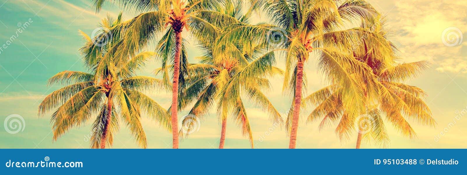 Grupo de palmeras, panorama del verano del estilo del vintage, concepto del viaje