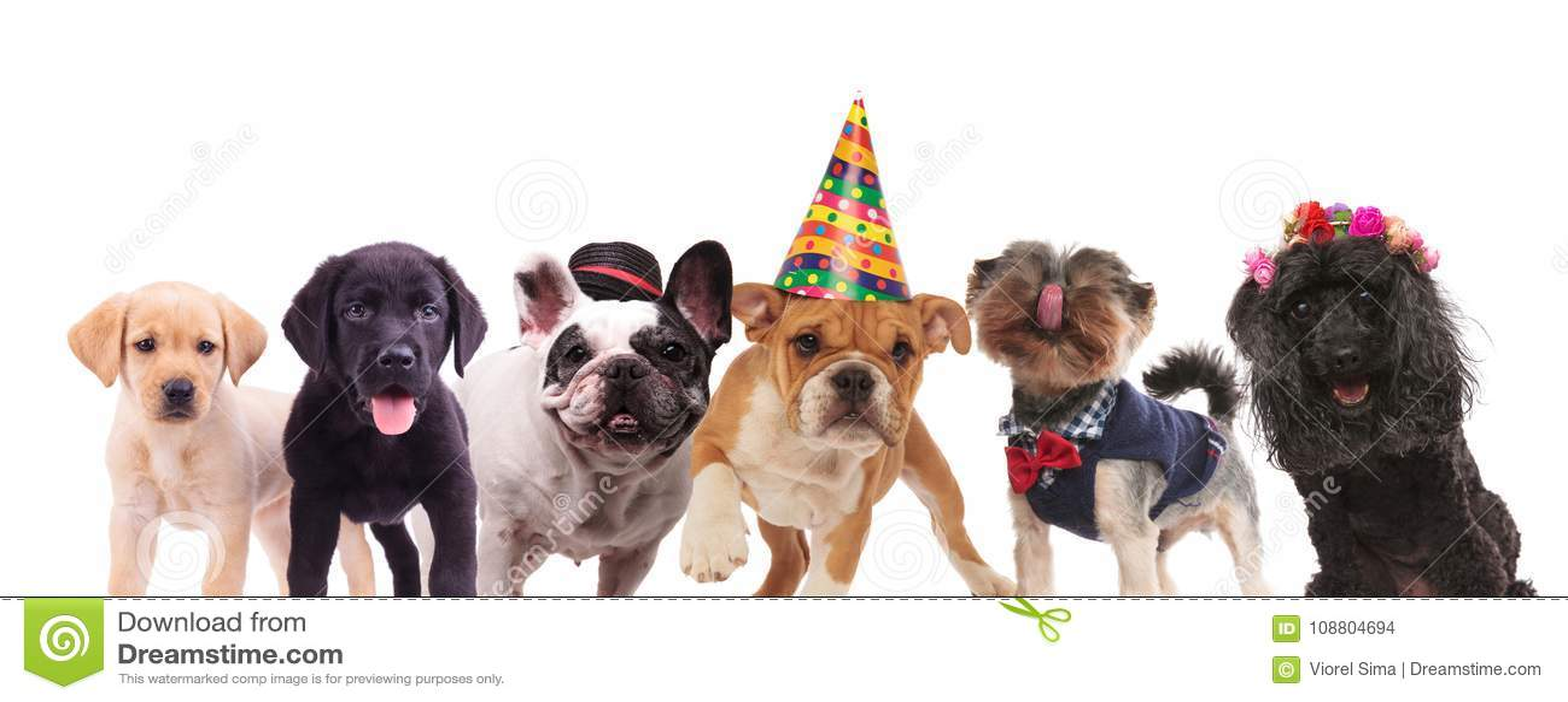 Grupo de perros lindos que se unen