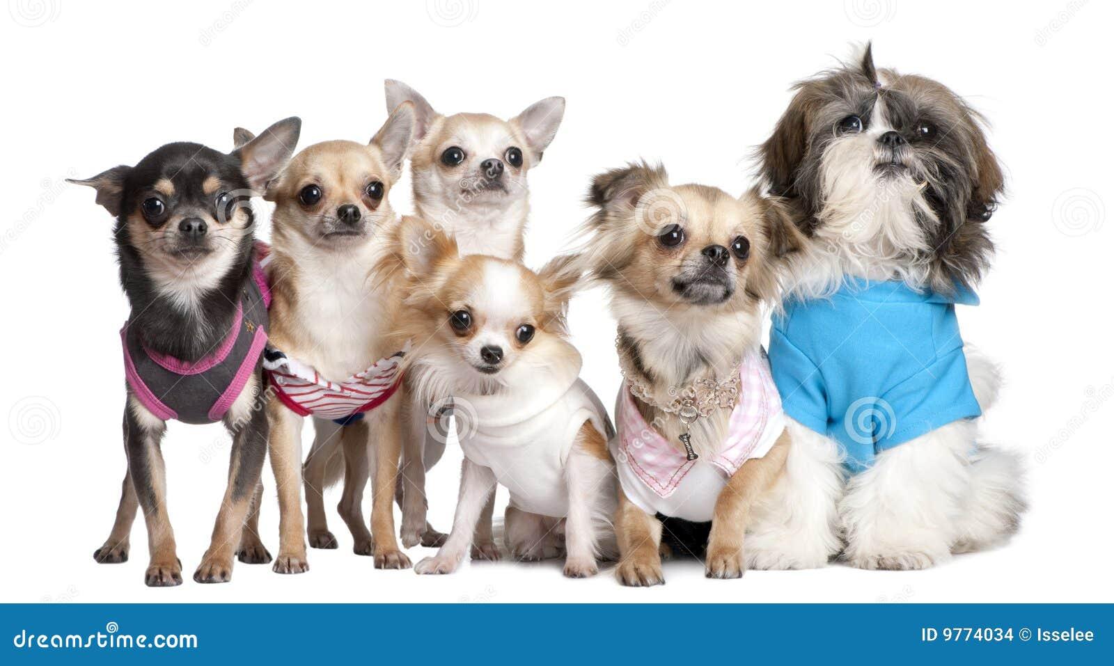 ... De Perros Vestidos-para Arriba Imagenes de archivo - Imagen: 9774034