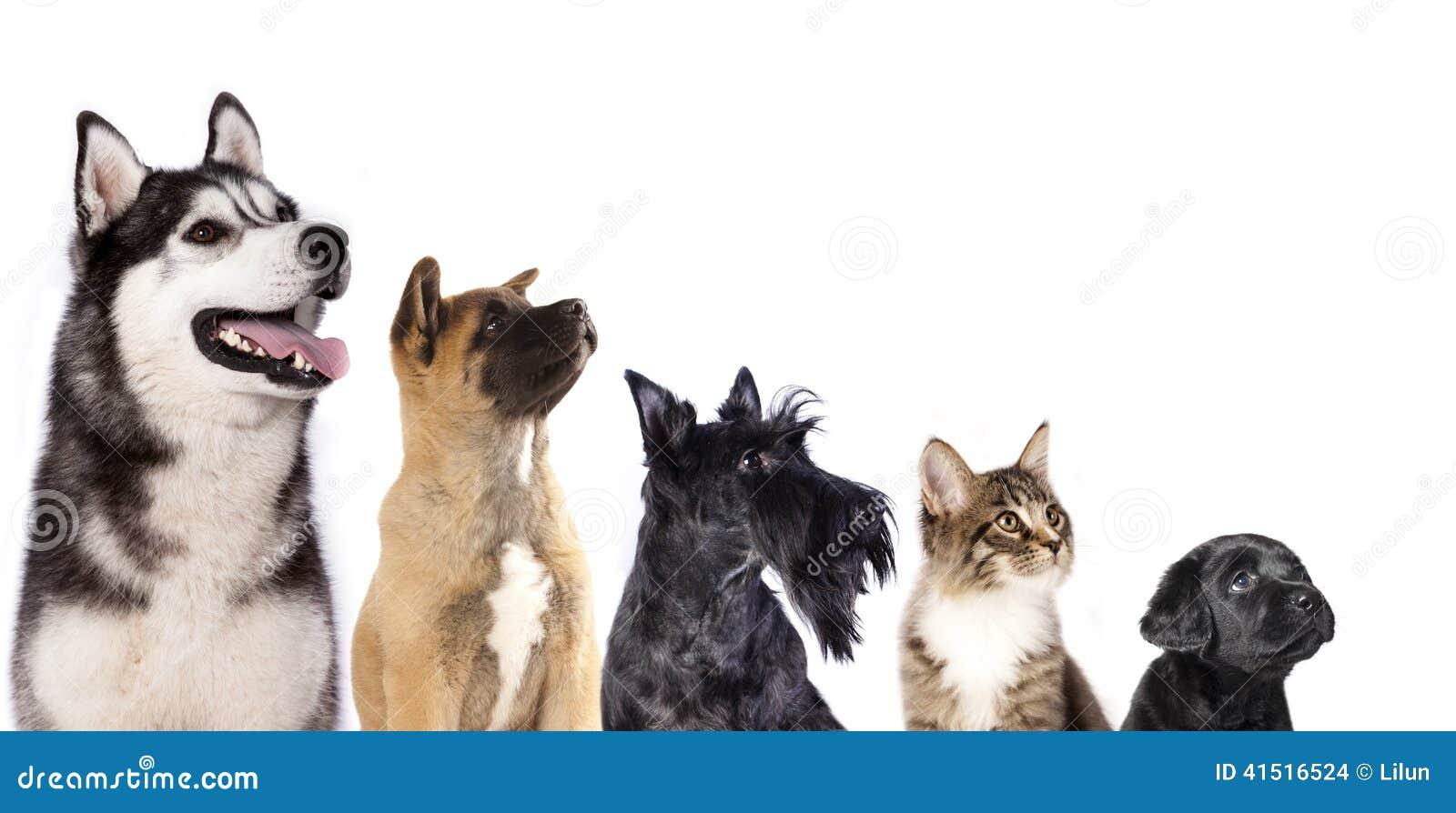 Grupo de perros y de gatito