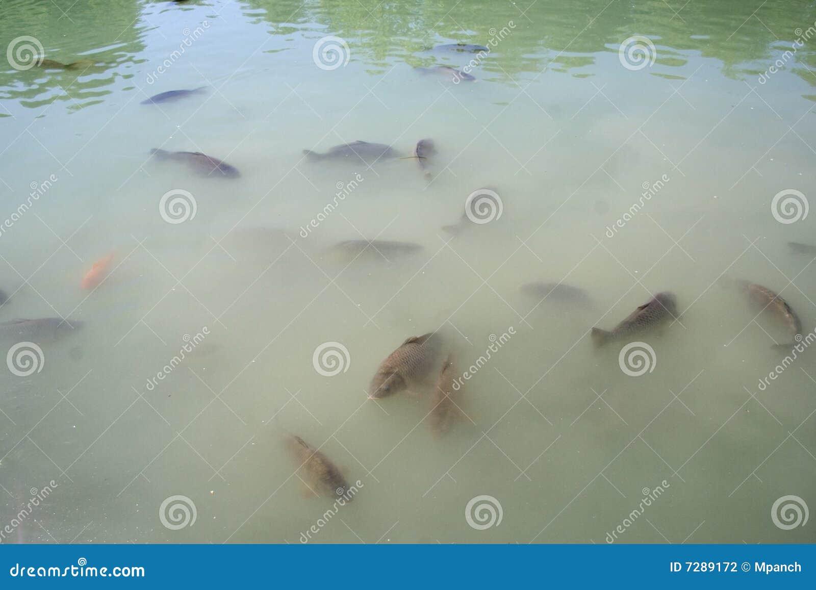 Grupo de pescados