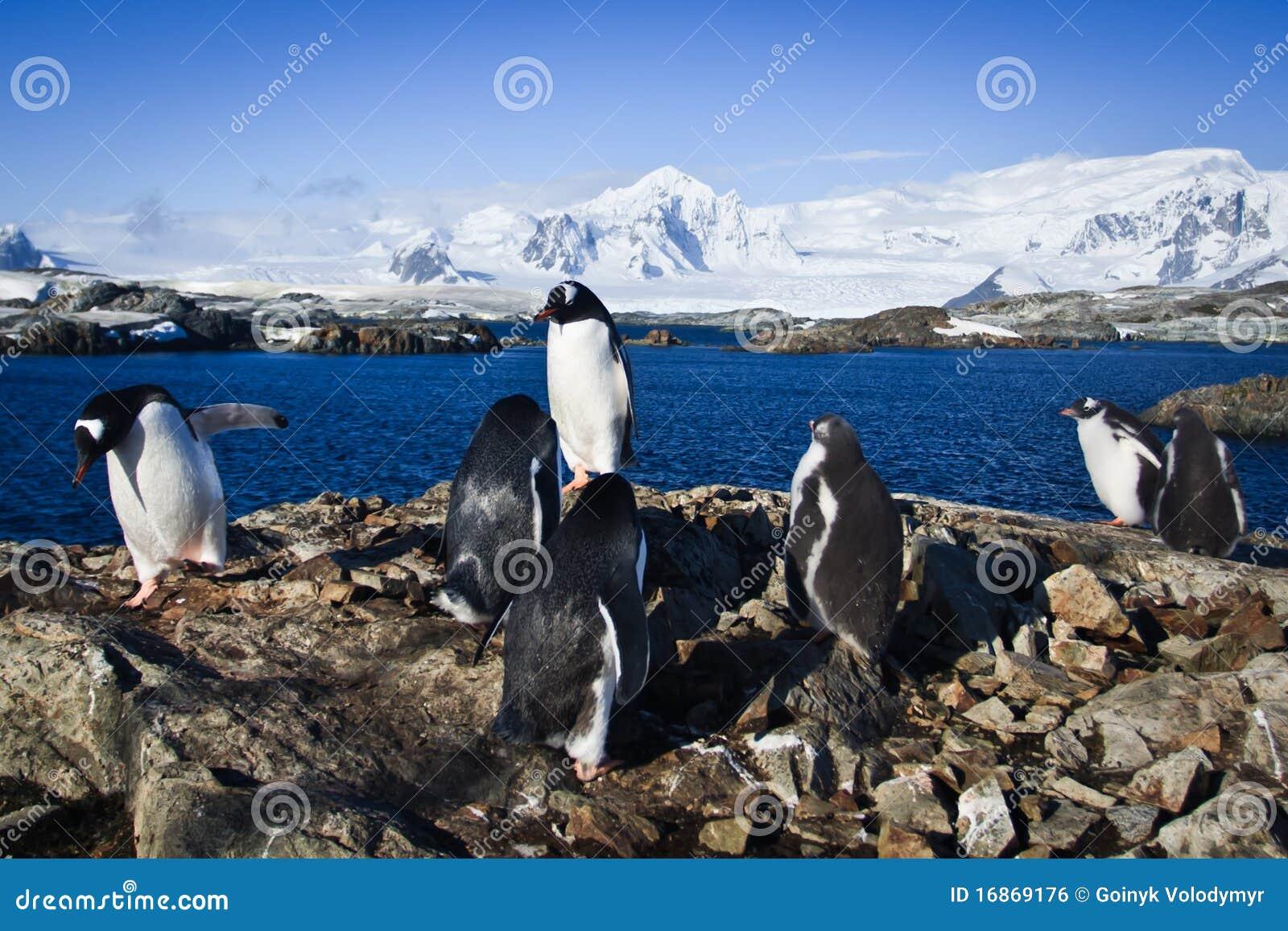 Grupo de pinguins