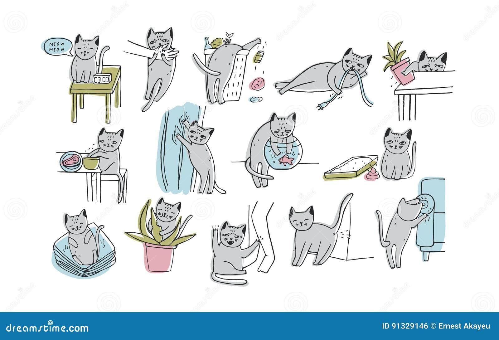 Grupo de problema com comportamento do gato O gatinho que mia, morde, riscos, sofá das marcas, sonos na roupa, vai ao toalete