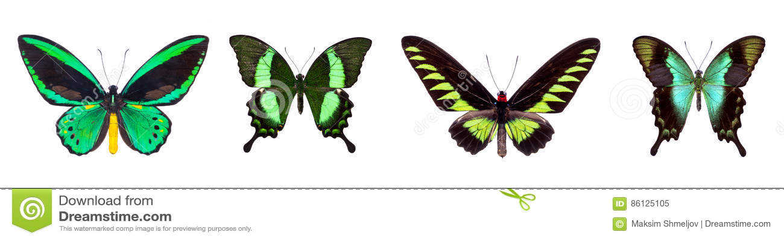 Grupo de quatro borboletas bonitas verdes