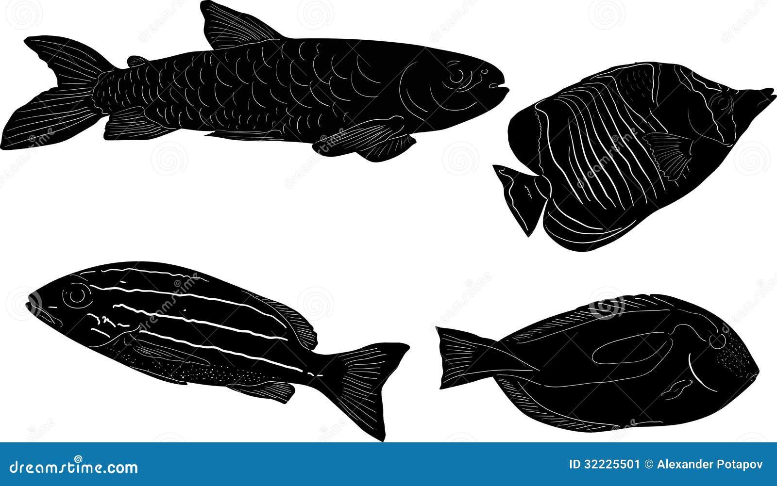 Download Grupo De Quatro Sketchs Dos Peixes Isolados No Branco Ilustração do Vetor - Ilustração de vetor, isolado: 32225501