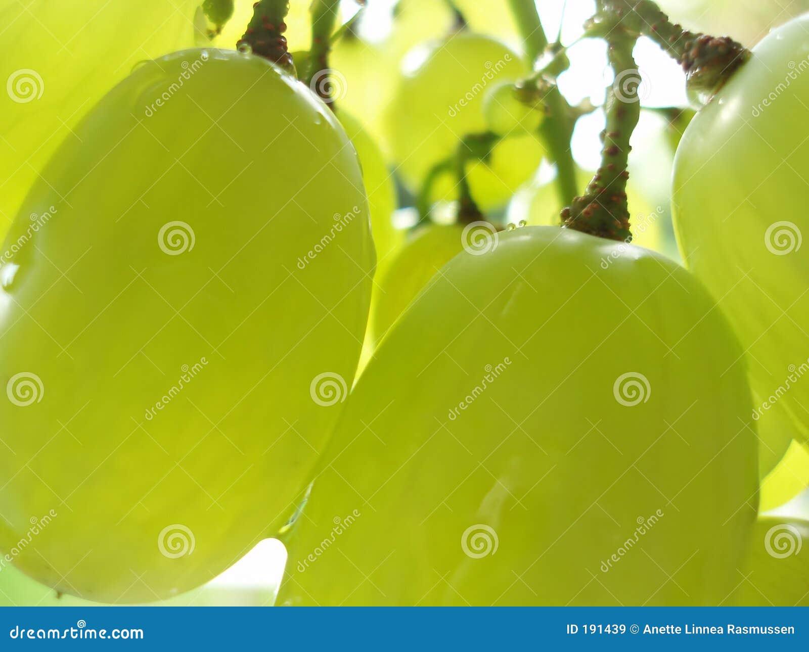 Grupo de uvas verdes
