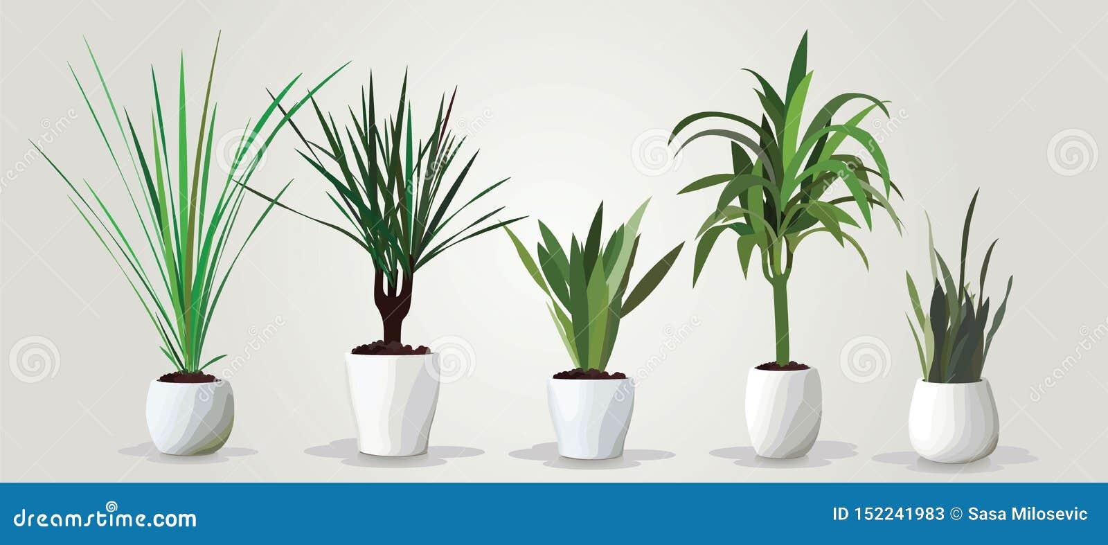 Grupo do vetor de houseplants verdes realísticos em uns potenciômetros