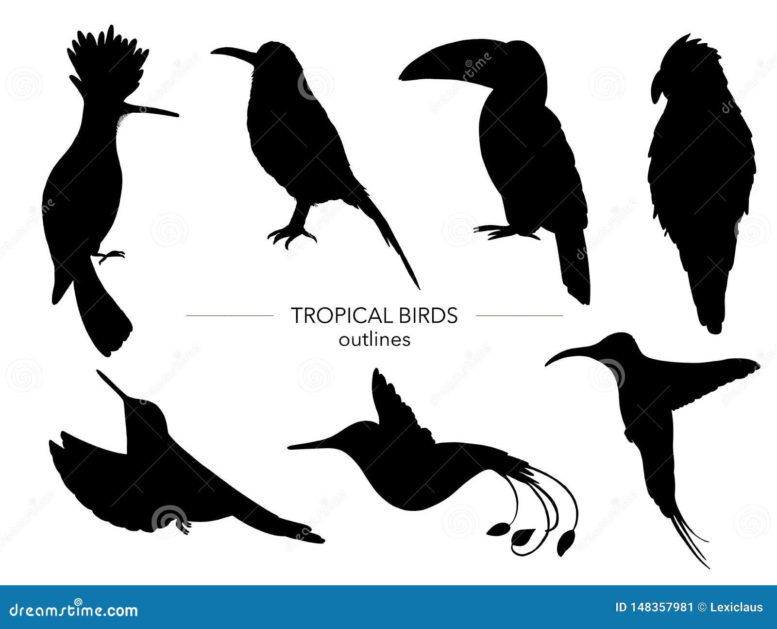 Grupo do vetor de p?ssaros tropicais