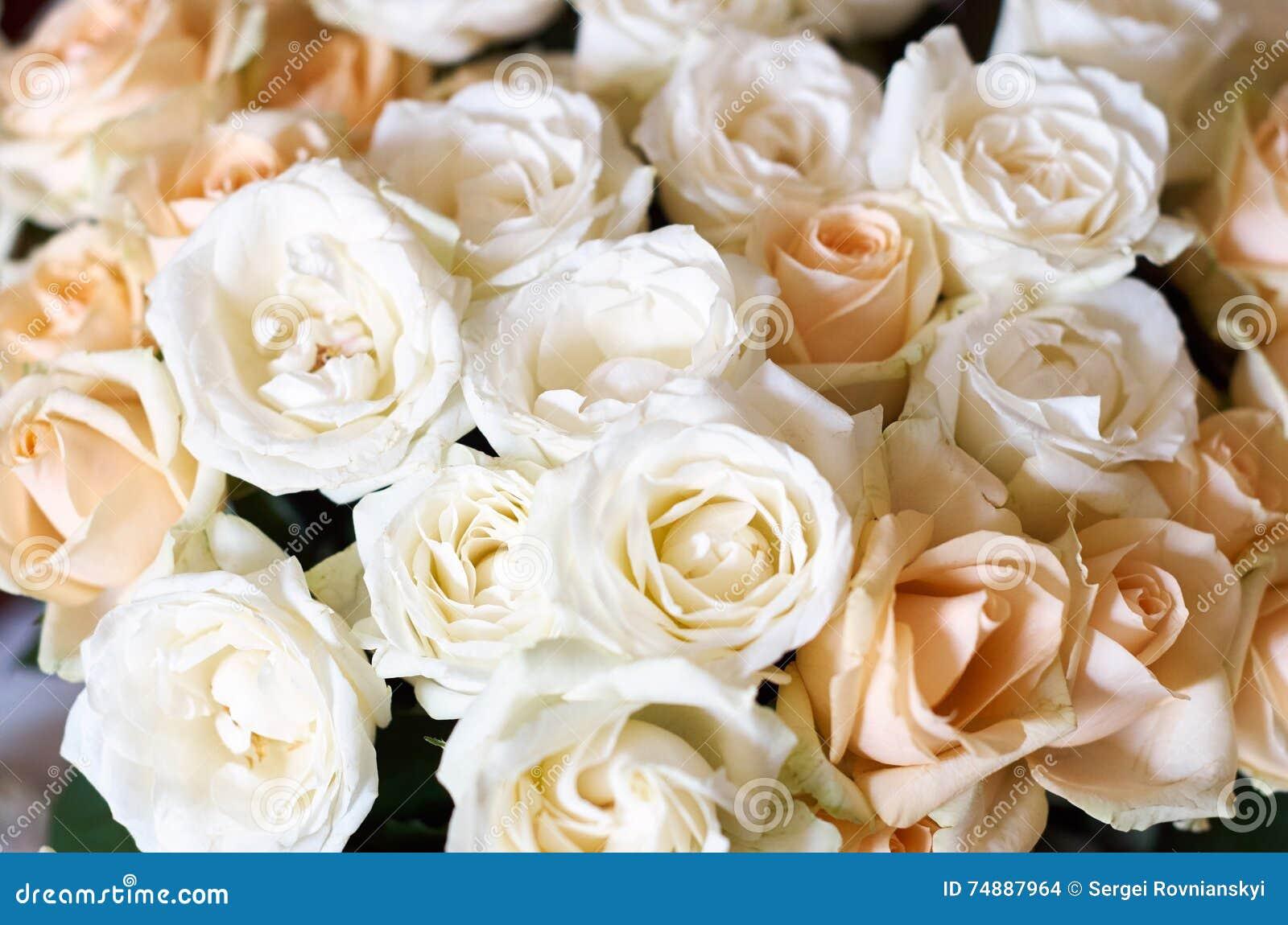 Grupo grande de rosas cor-de-rosa múltiplas