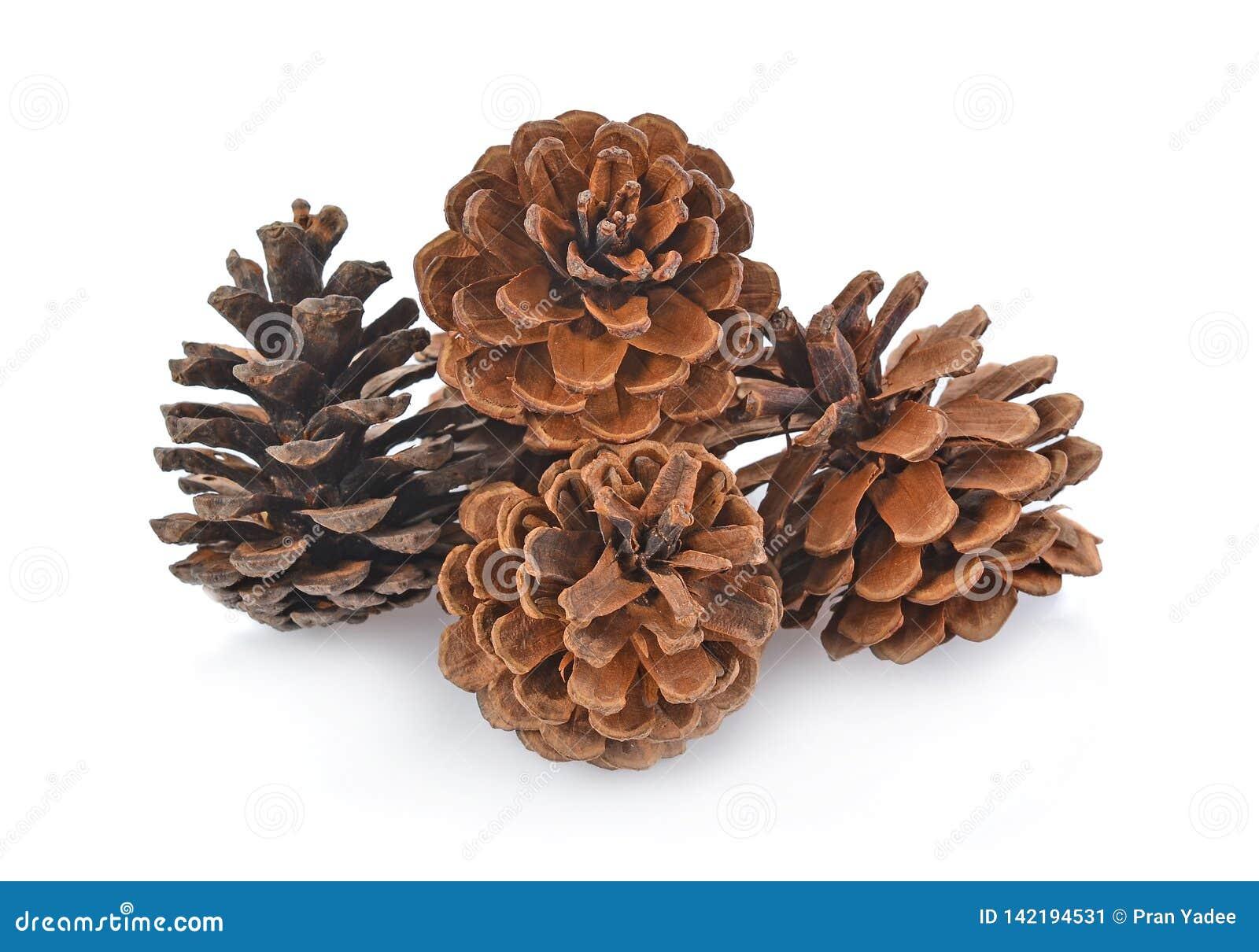 Grupo grande de várias árvores coníferas dos cones isoladas no fundo branco