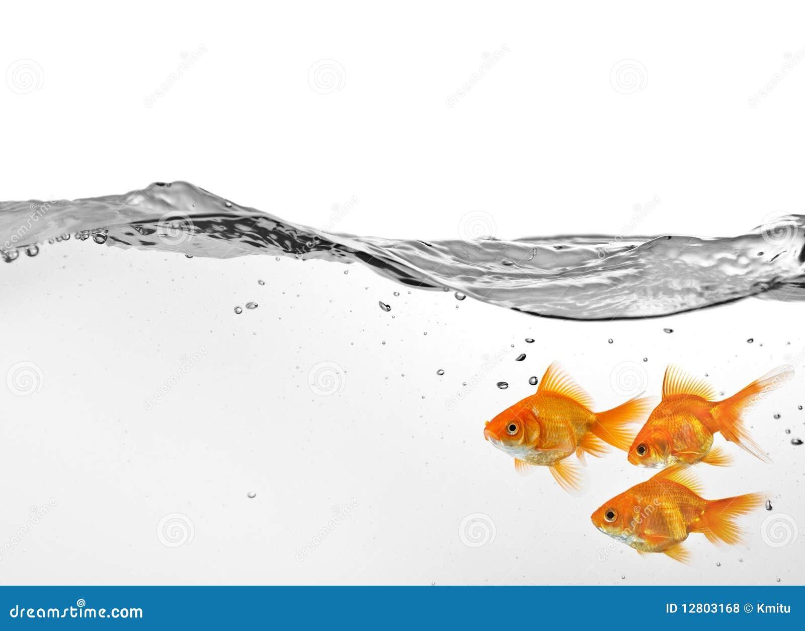 Grupo pequeno de goldfish na água