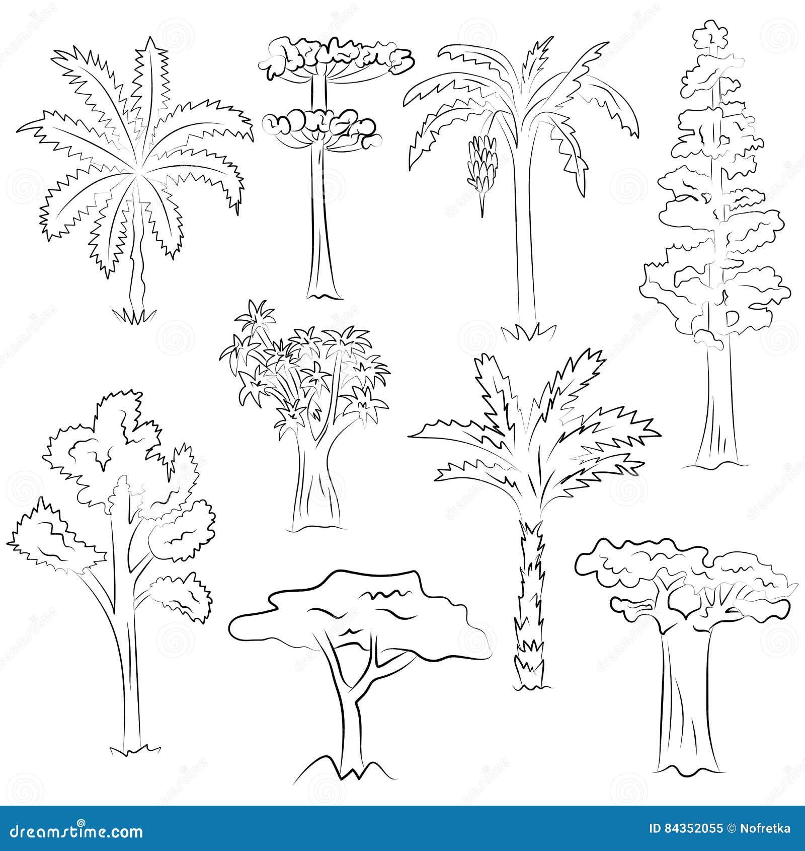 Grupo tirado mão de árvores Desenhos da garatuja das palmas, sequoia, aloés, acácia, Ceiba no estilo do esboço
