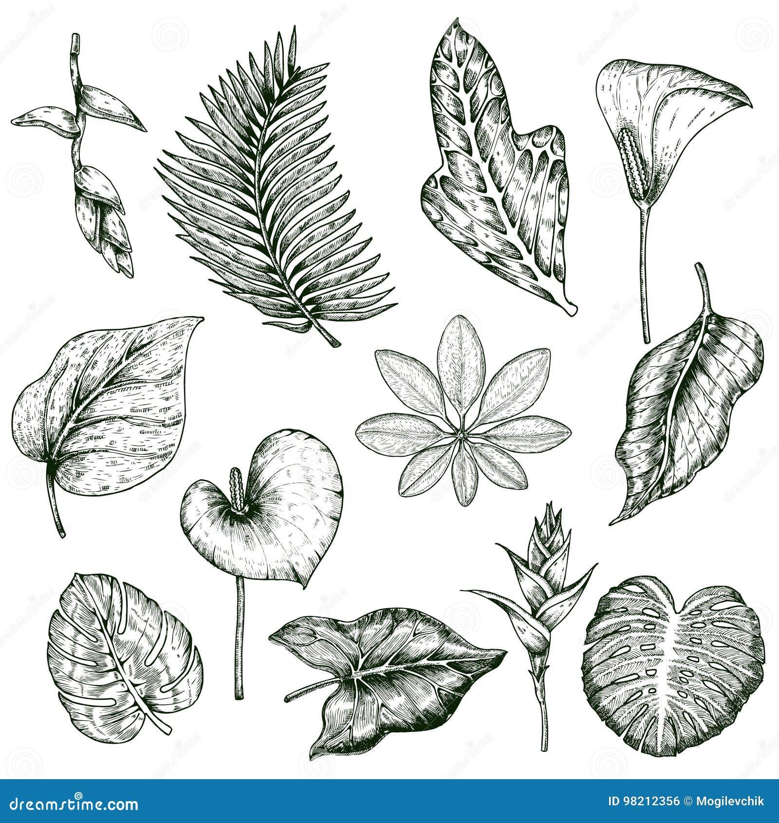 Grupo tirado mão do Monochrome das plantas tropicais