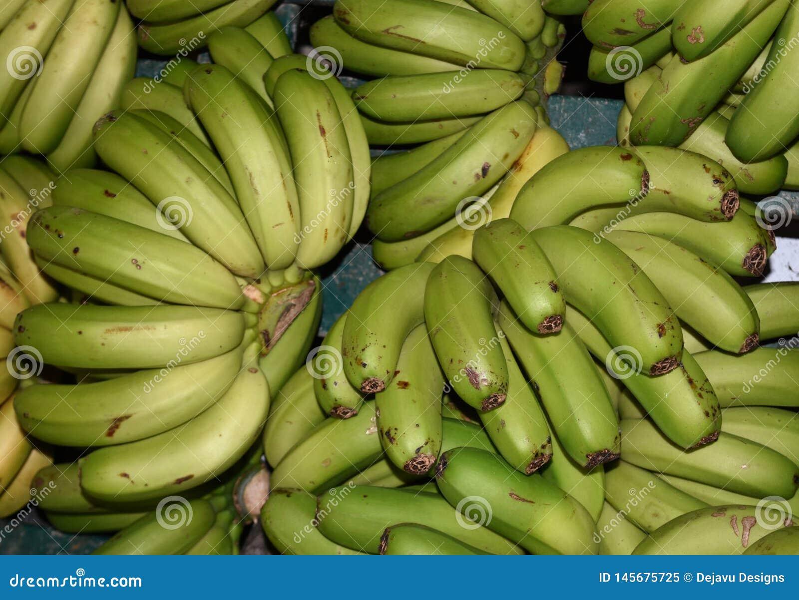 Grupos das bananas verdes crescidas recentemente disponíveis no mercado