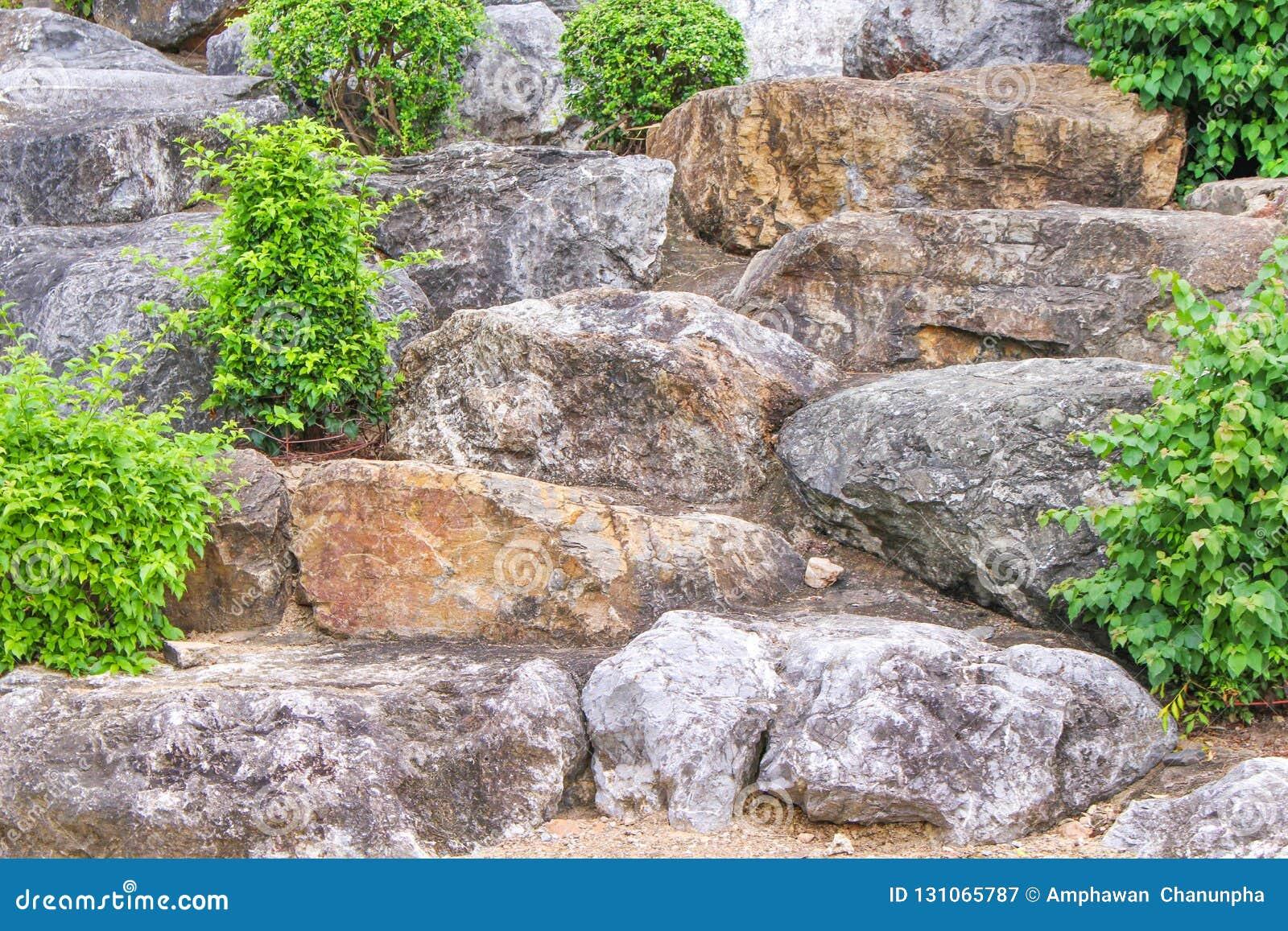 Grupos de piedra con el pequeño árbol, fondo natural de los modelos
