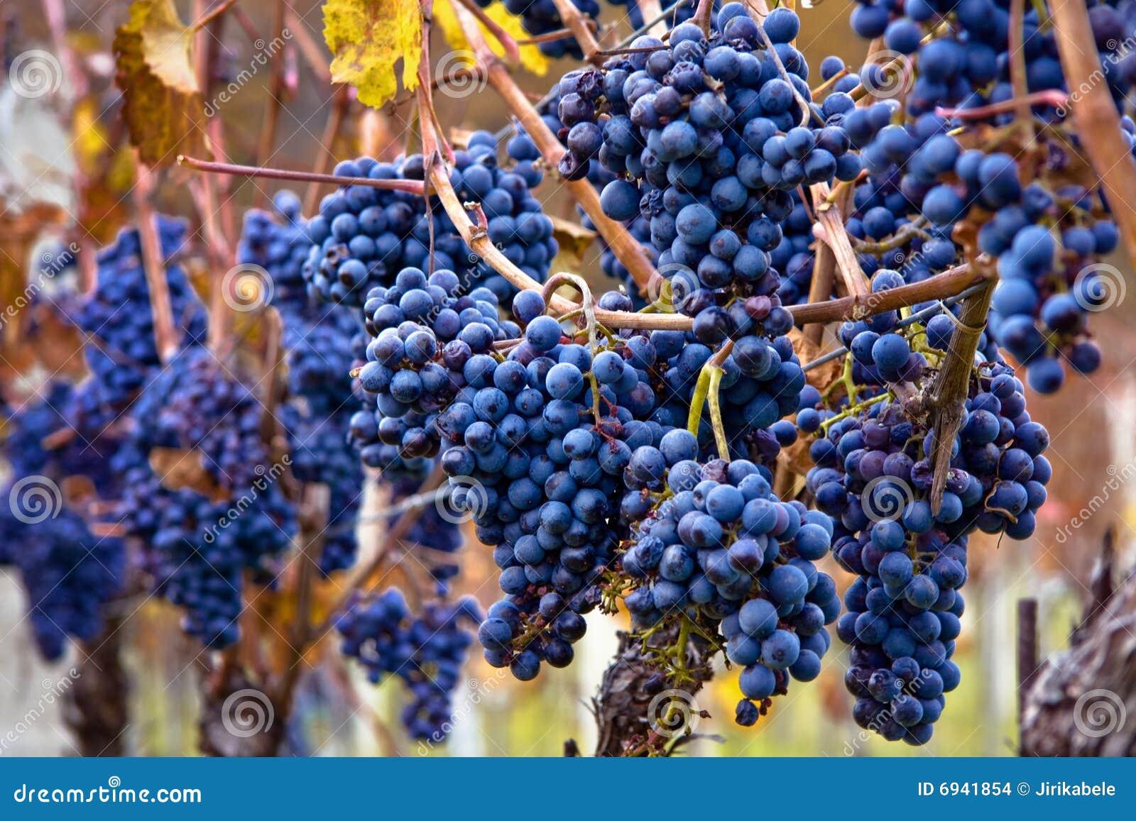 Grupos de uvas