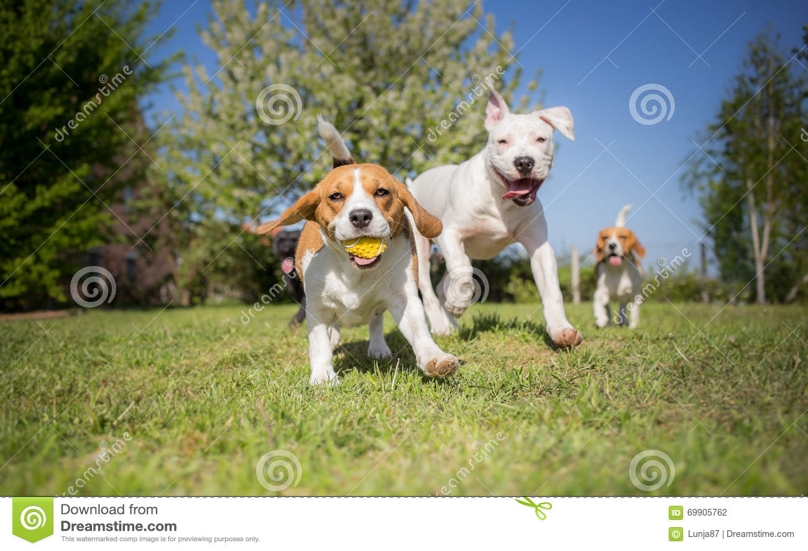 Grupp av att köra för hundkapplöpning