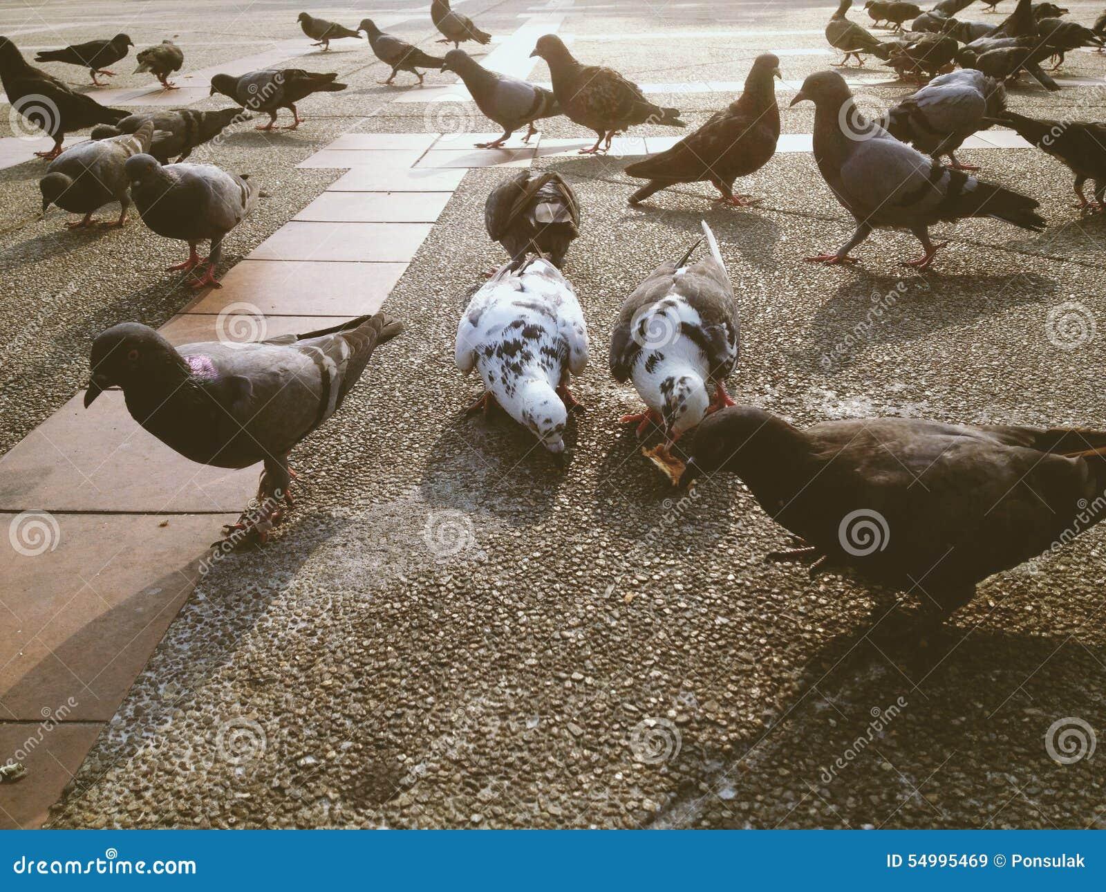 Grupp av duvan i parkera