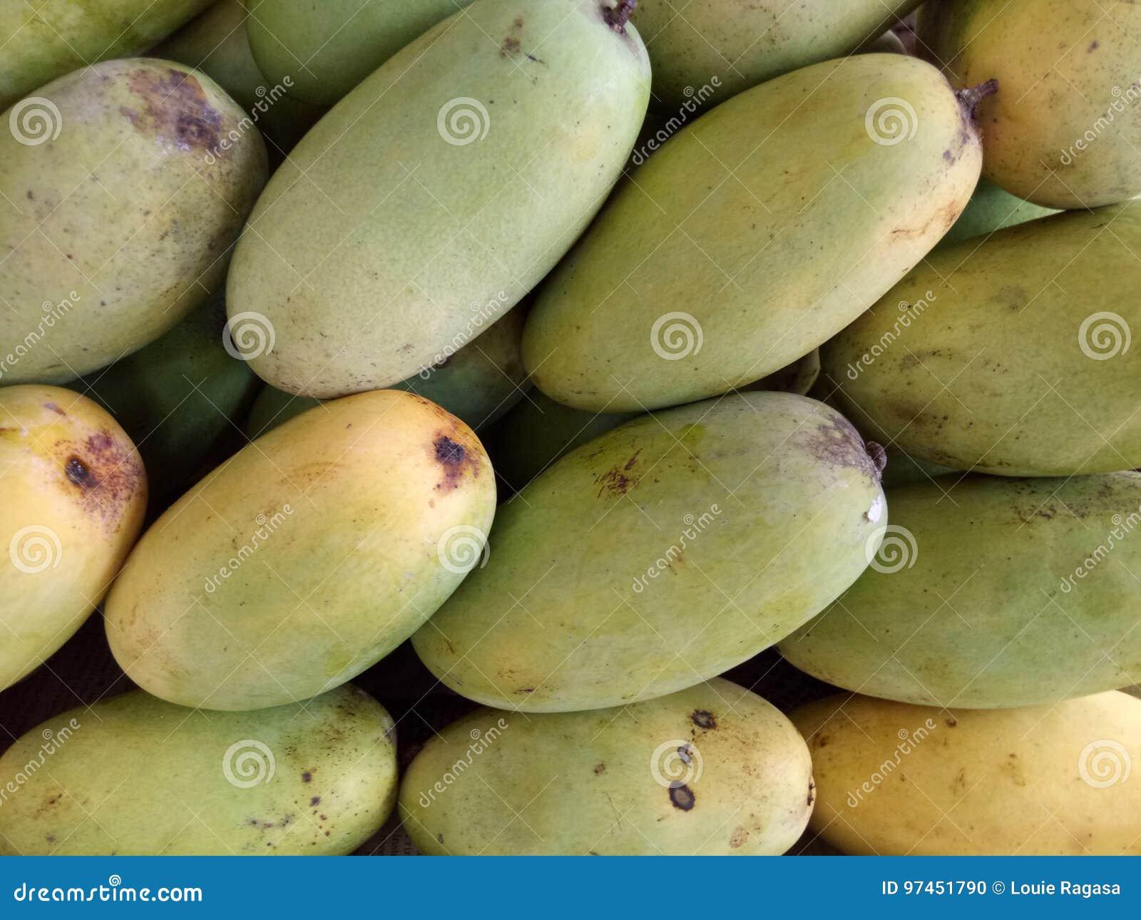 Grupp av grön omogen mangofrukt