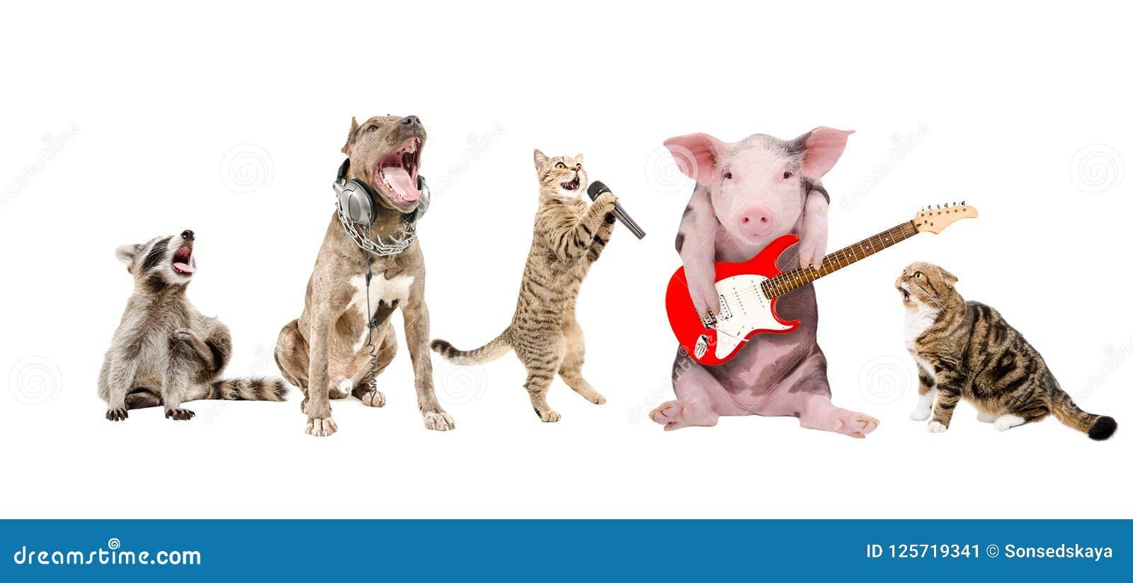 Grupp av gulliga roliga djurmusiker
