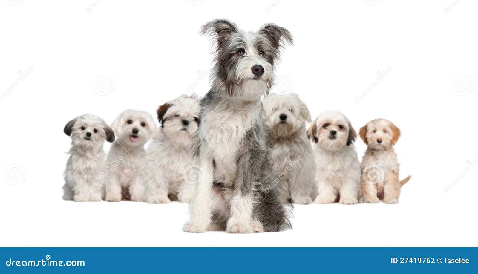 Grupp av hundar