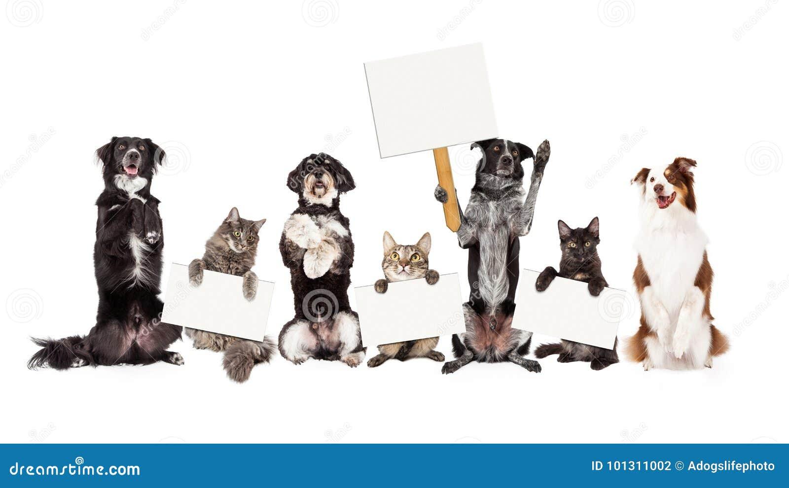 Grupp av hundkapplöpning och katter som sitter rymma upp tomt tecken