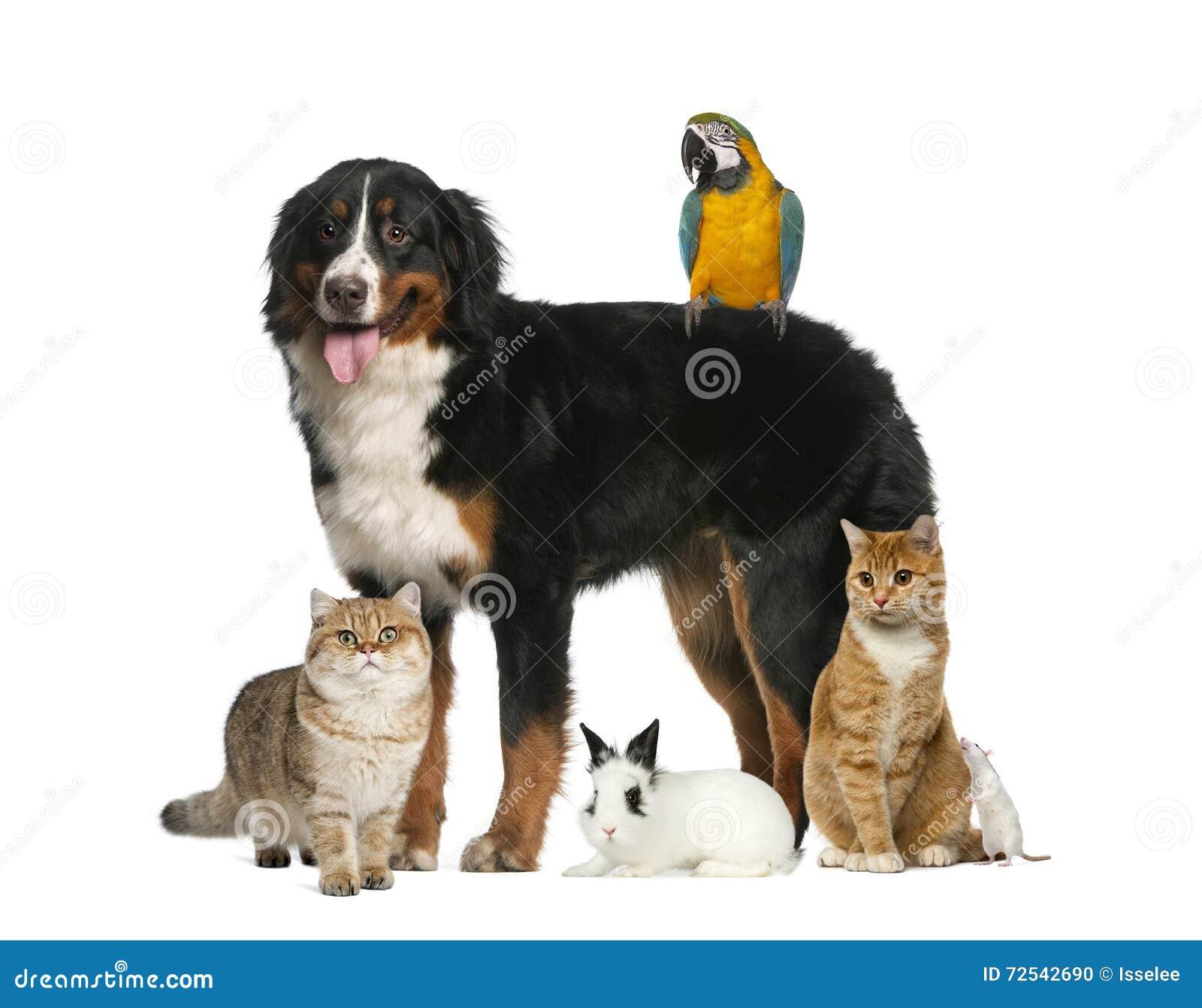 Grupp av husdjur