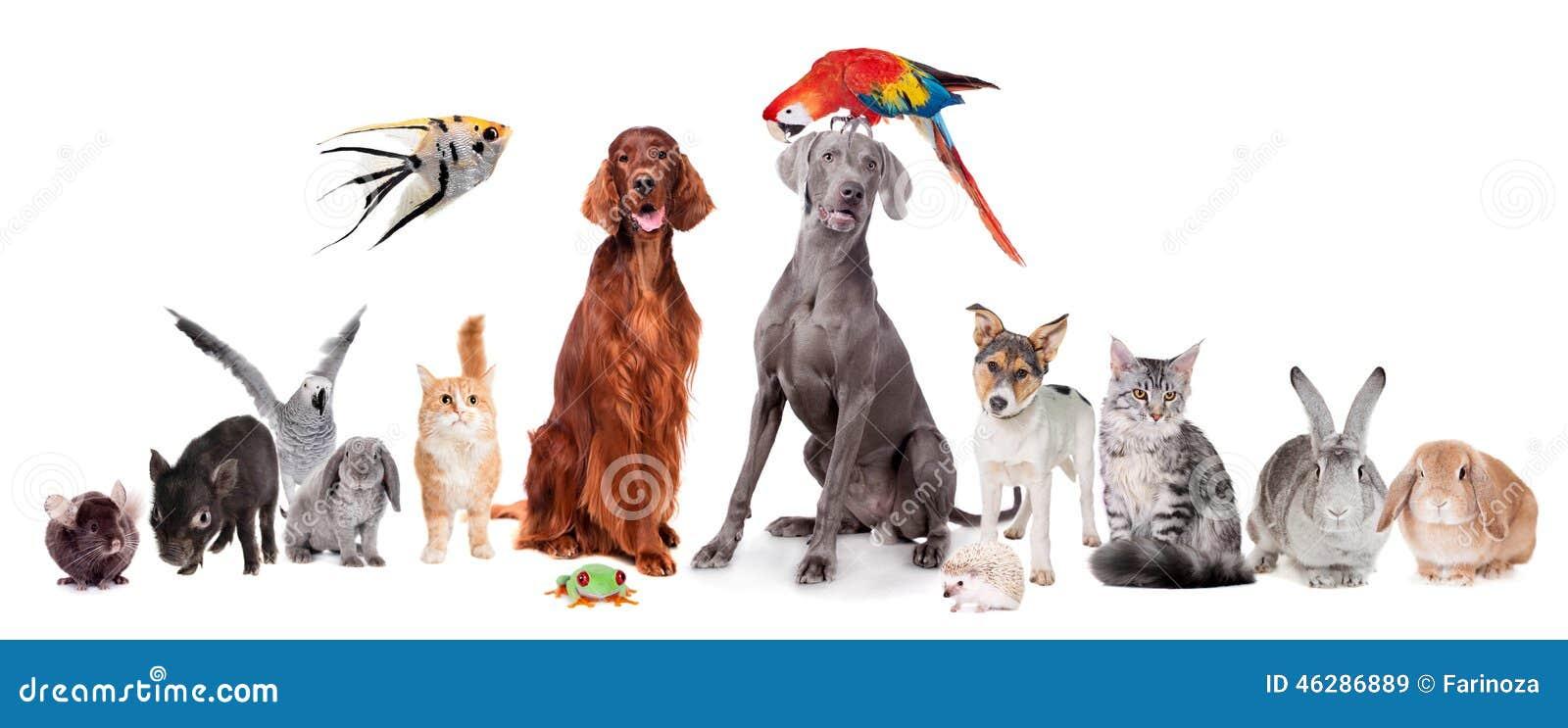Grupp av husdjur på vit