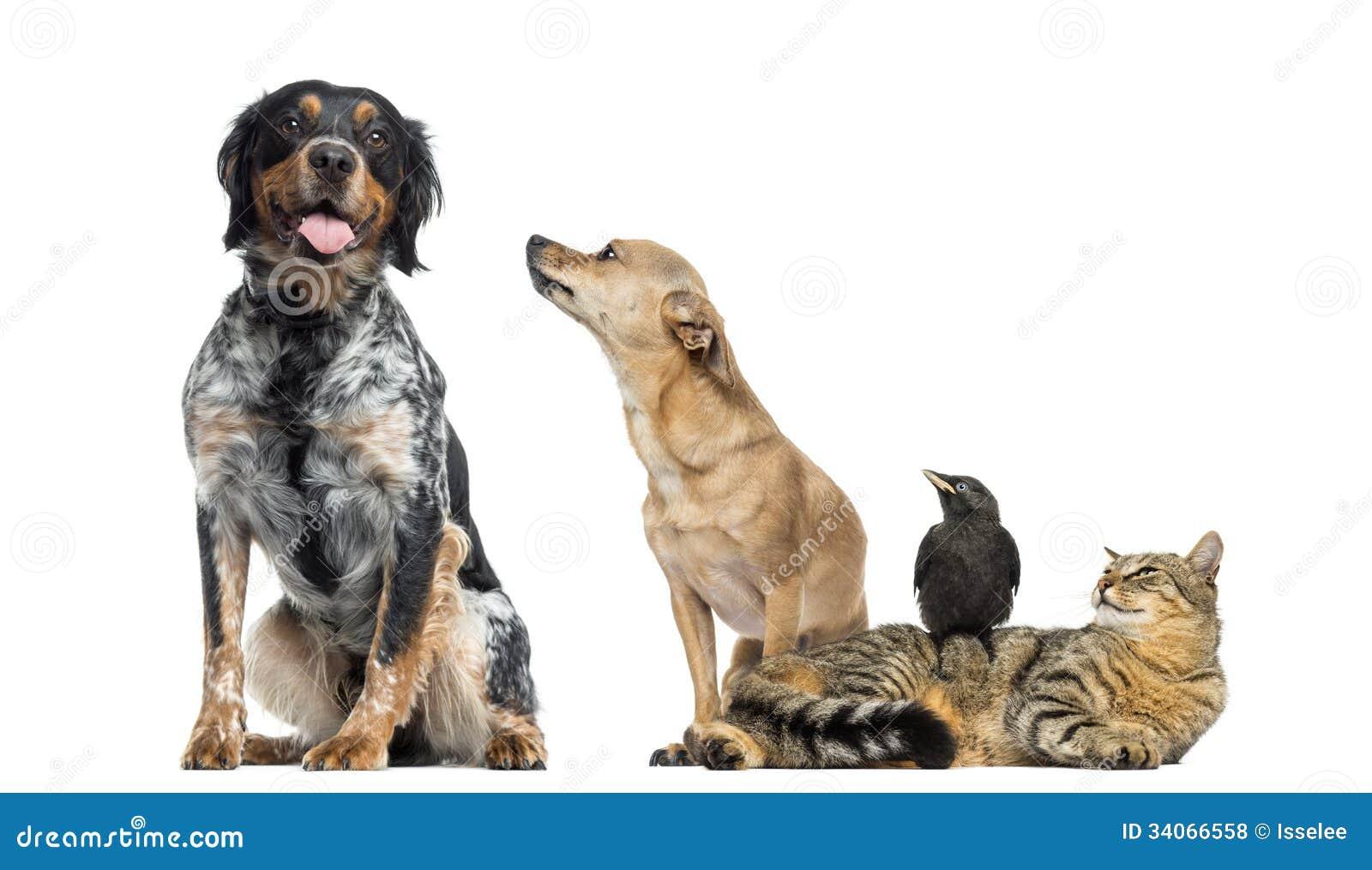 Grupp av husdjur som isoleras