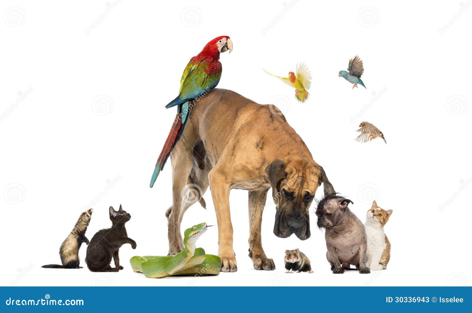 Grupp av husdjur tillsammans