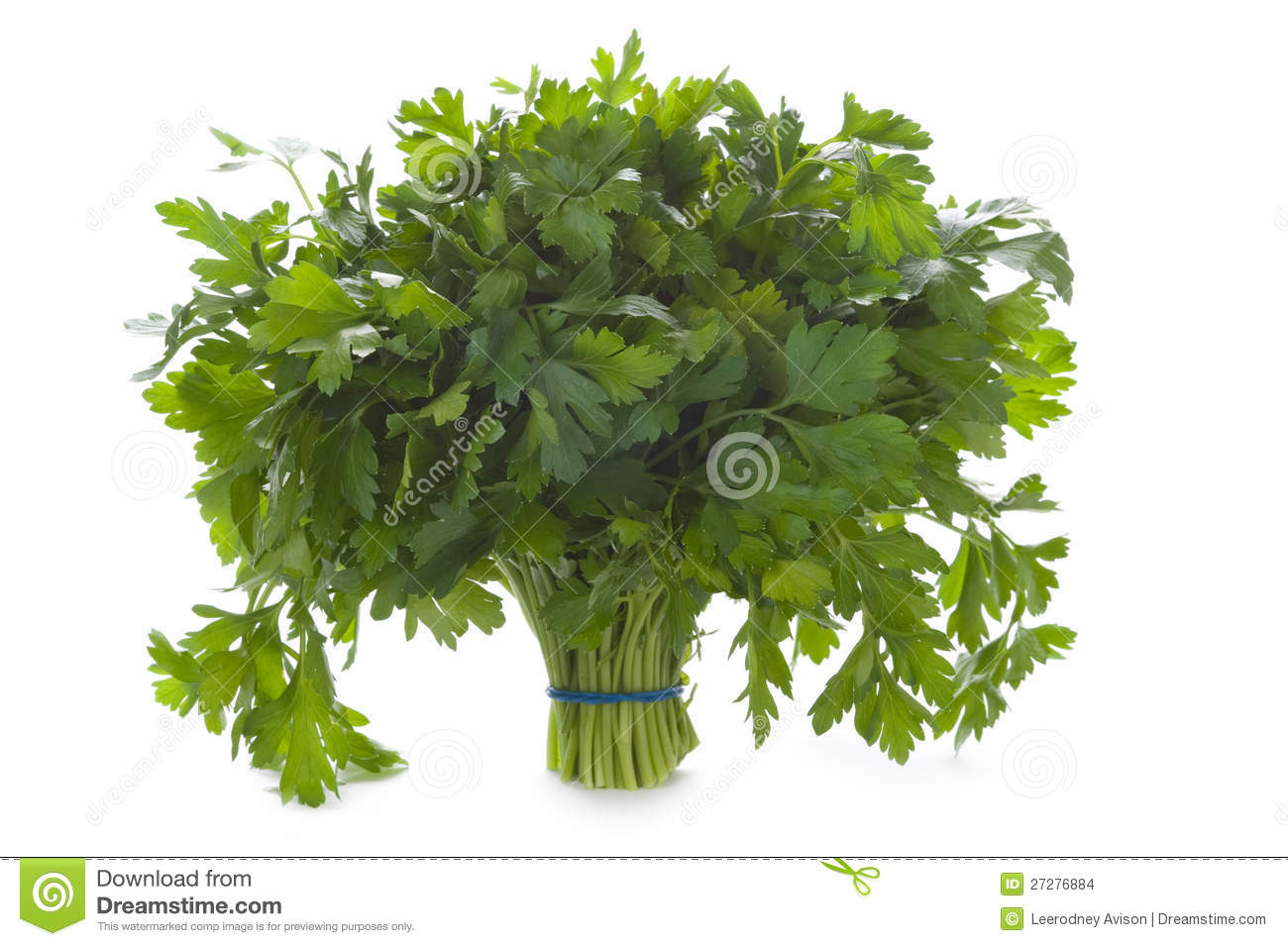 Grupp av isolerad plan leaved parsley