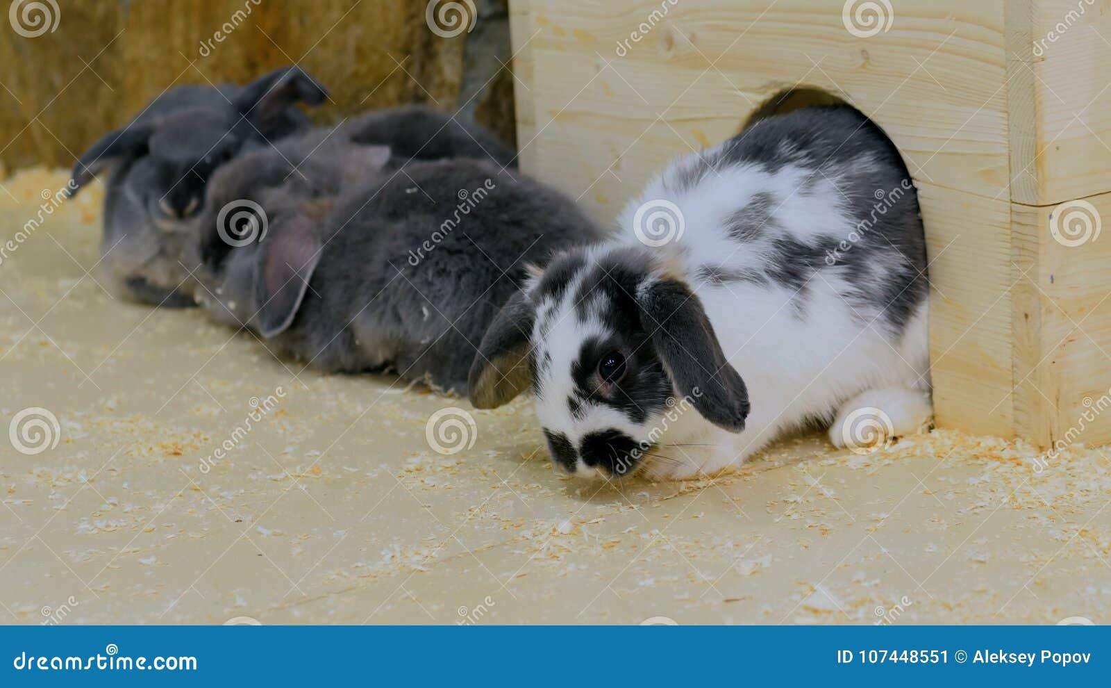 Grupp av kaniner som sitter nära det vita trästaketet