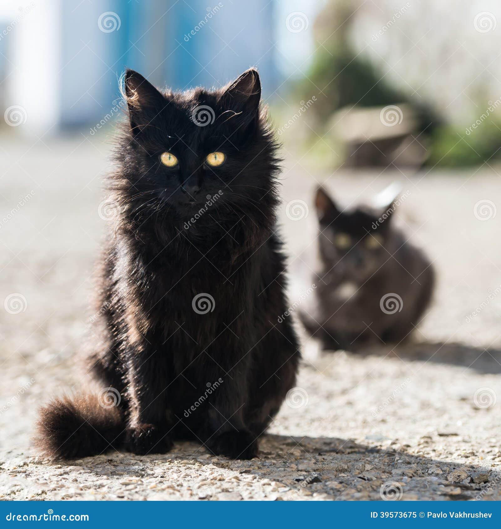 Grupp av katter