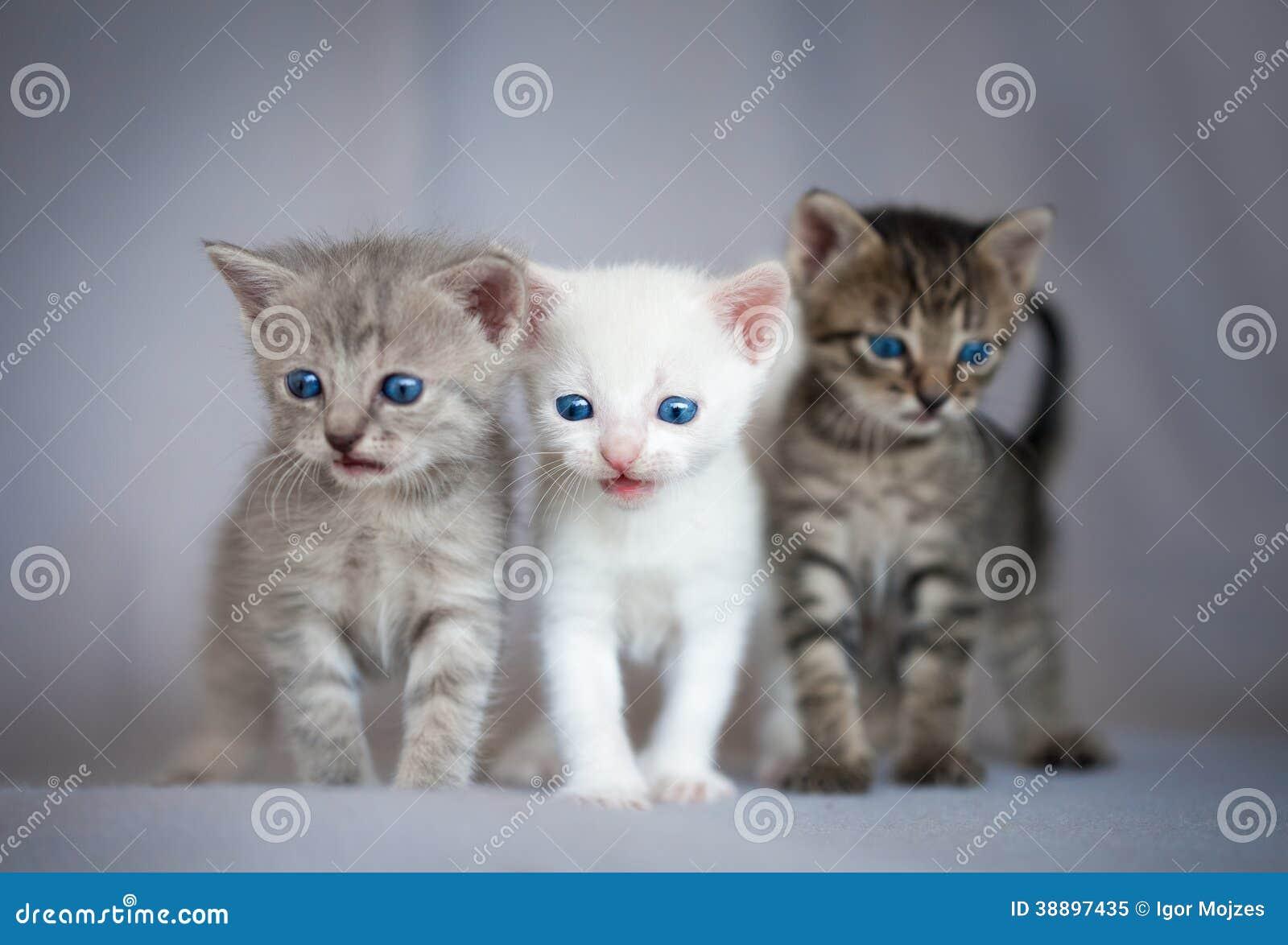 Grupp av små kattungar