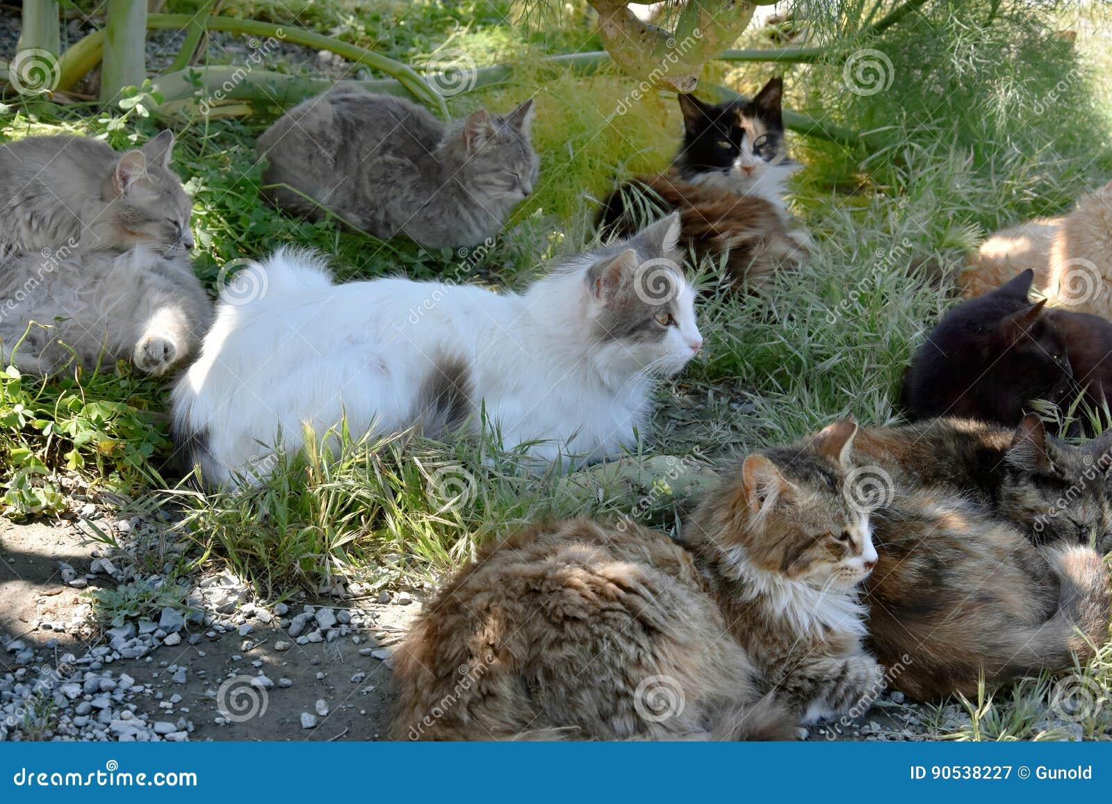 Grupp av tillfälliga katter