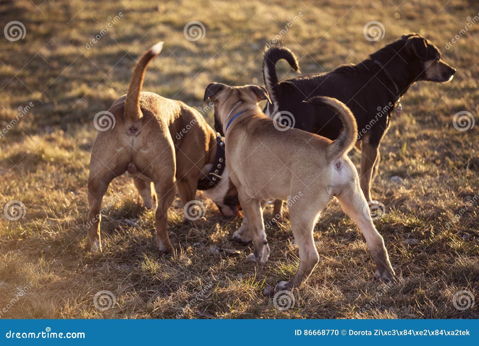 Grupp av ung hundkapplöpning som utanför spelar