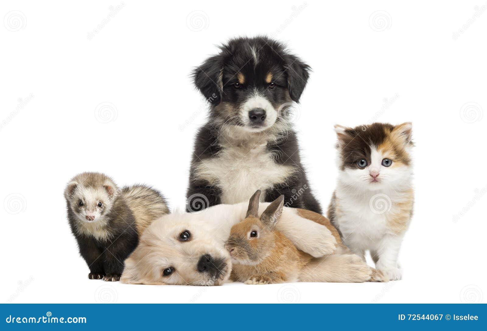 Grupp av unga husdjur