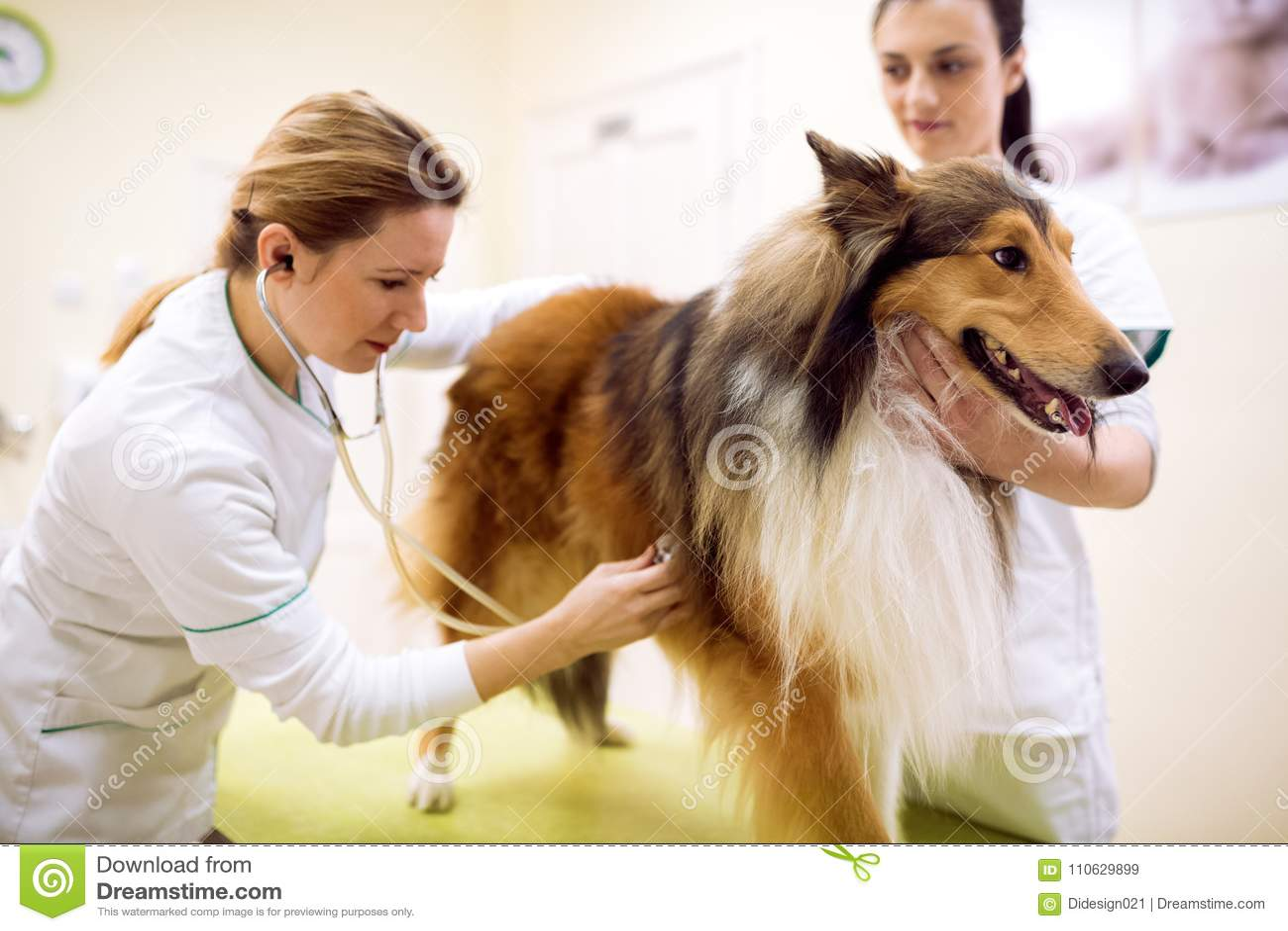 Grupp av veterinären som gör hundexamen på den älsklings- ambulansen