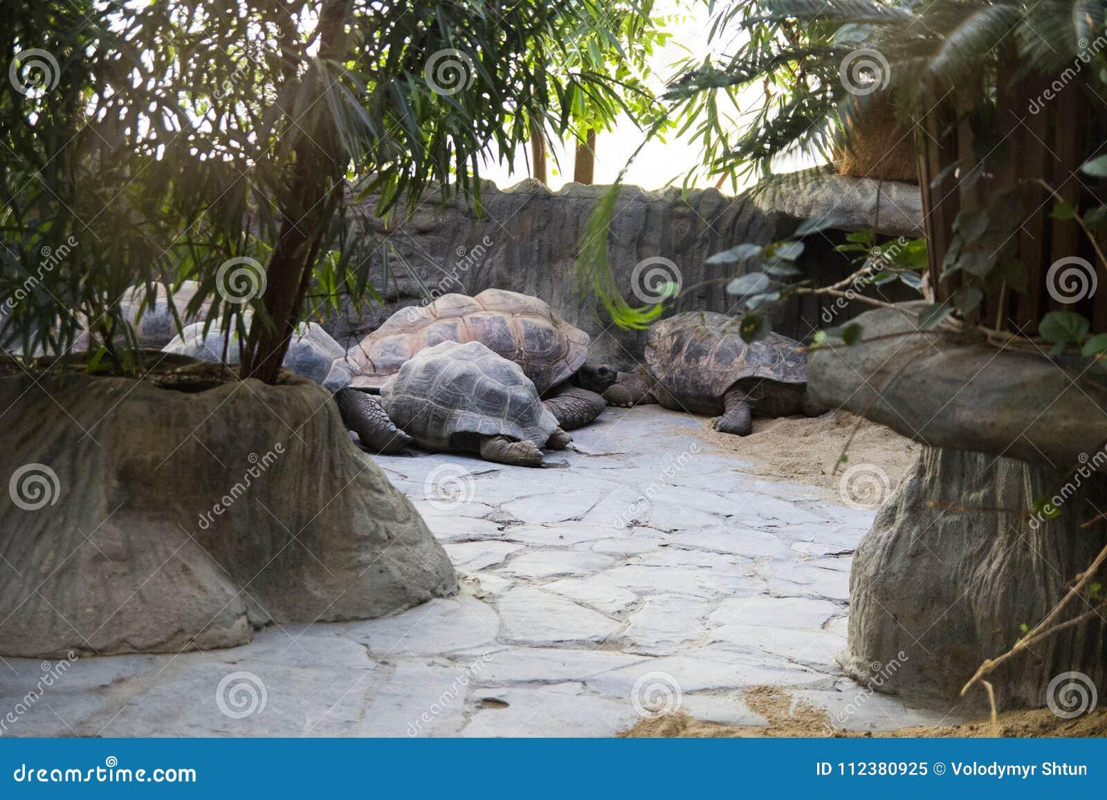Gruppe der riesigen Schildkröte entspannend oder schlafend der Zoo