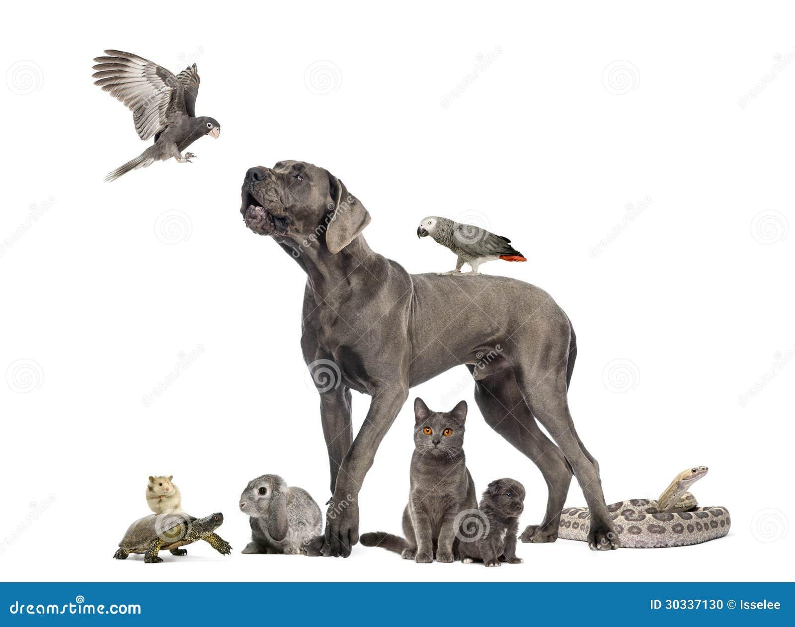 Gruppe haustiere hund katze vogel reptil kaninchen lokalisiert